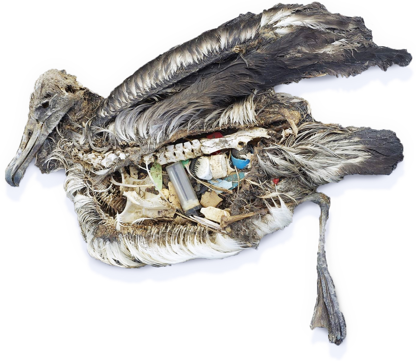 Sea Bird filled with plastic